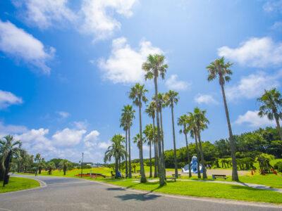 【湘南エリア】に愛犬とお出かけ!辻堂海浜公園で広い芝生と砂浜のダブル散歩を楽しもう